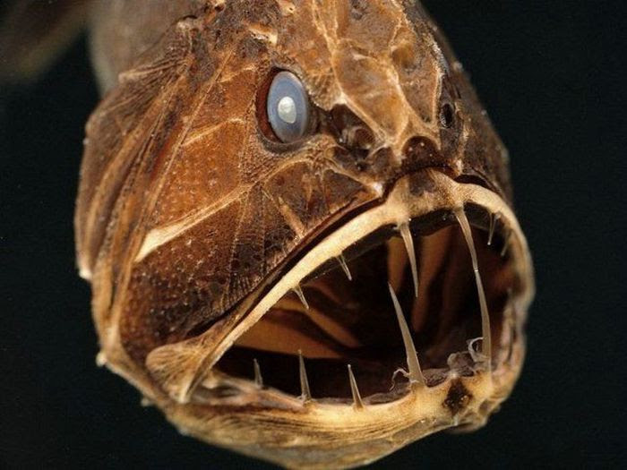 The Ugliest and Scariest Fishes (21 pics)