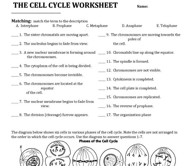 11.4 Meiosis Workbook Answers + My PDF Collection 2021
