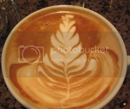 Coffee - tree Pictures, Images and Photos