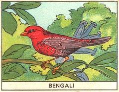 oiseaux mart 9