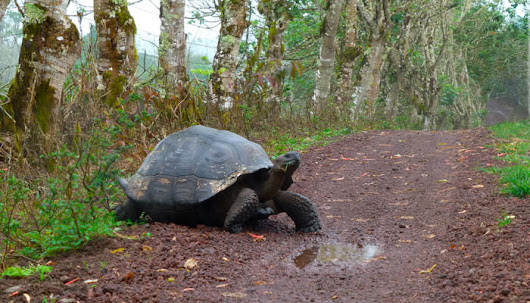 10 Things To Do on Your Galapagos Island Trip | Galapagos Things To Do