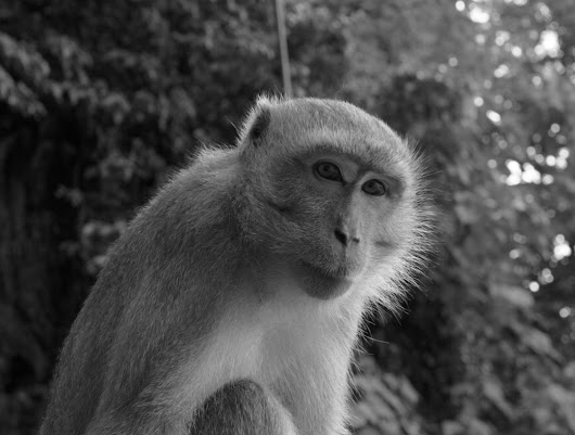 "Michelle Burk on Twitter: ""Met a friend in Malaysia. #batucaves #travel #malaysia #photography #animals #natgeo #travelphotography #blacknwhite """