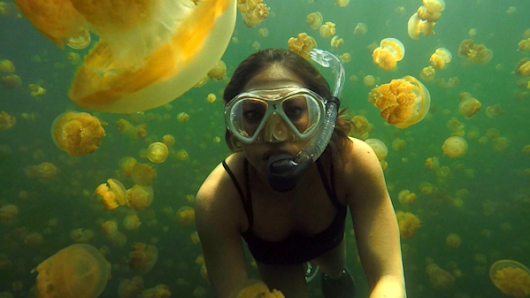 Ginger Zee Travels to Palau's Jellyfish Lake