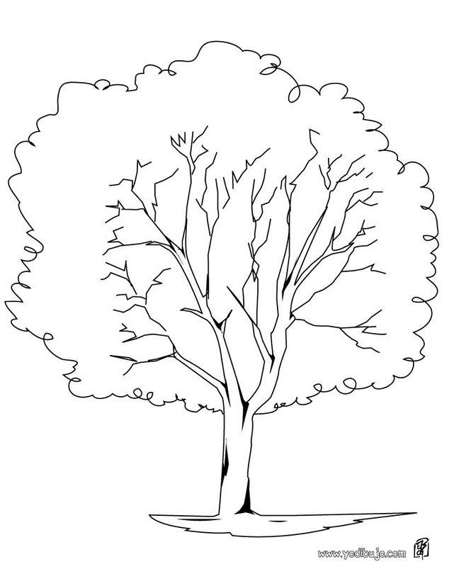 Dibujos Para Colorear Un árbol Plátano Eshellokidscom