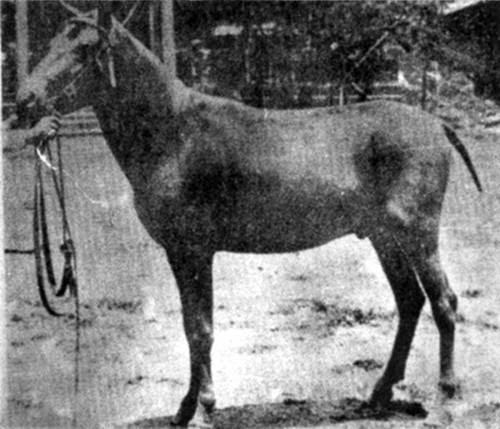Horses Lovers Horse Breeds Begi Tinker Horse Vanner Horse