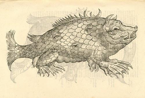 16th century woodcut of sea monster by Aldronvandi