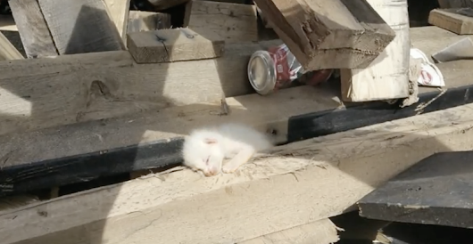 Man spends 7 hours digging in piles of wood when he hears cries for help, finds heartbreaking discovery | The Meow Post Daily Cat Blog