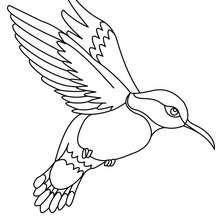 vogel ausmalbilder kostenlos zum ausdrucken - kinder