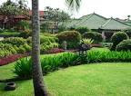 Small Garden Idea with Mix of Tropical Plants - Most Beautiful Gardens