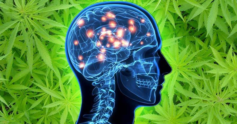 Image result for Marijuana Compound Removes Toxic Alzheimer's Protein From the Brain