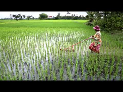 Farmers in Cambodia create new tools to adapt to climate change
