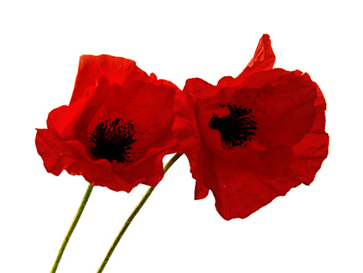 WE REMEMBER -THANK YOU.