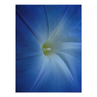 Heavenly Blue Morning Glory Close-Up Print
