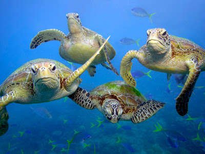 Save the Great Barrier Reef | World Wildlife Fund