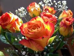ValentineRoses_21511d