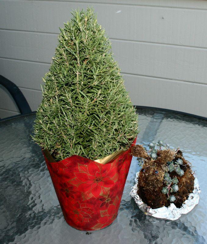 Rosemary Christmas Tree