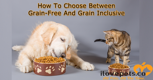 How To Choose Between Grain-Free And Grain-Inclusive Pet Food | I Love Pets