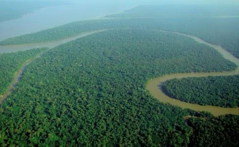 Amazônia apresenta 'grande risco de perda de árvores'