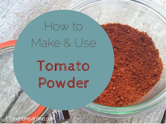 Dehydrated Tomatoes & Making Tomato Powder - Living Homegrown