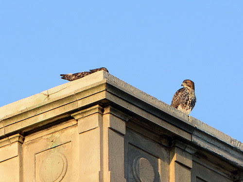 Cathedral Fledges