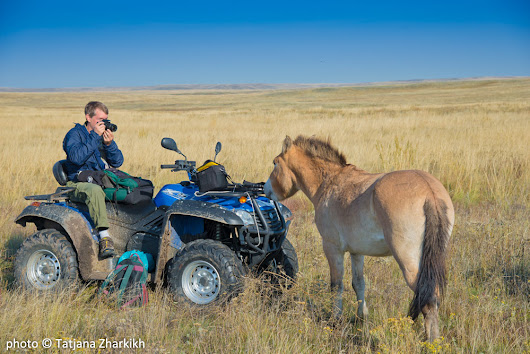 Return of the Wild Przewalski's Horse to the Russian Steppe - Travel For Wildlife