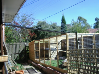 Cat Tunnel leading to Cat Enclosure