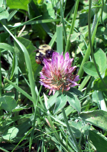Bee_91309