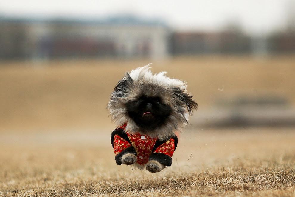 Собака-спортсмен в парку Пекіна, Китай