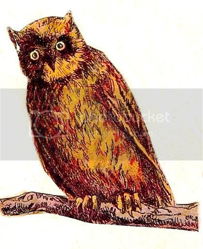 Vintage Owl Graphic