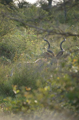 Kuduinbush