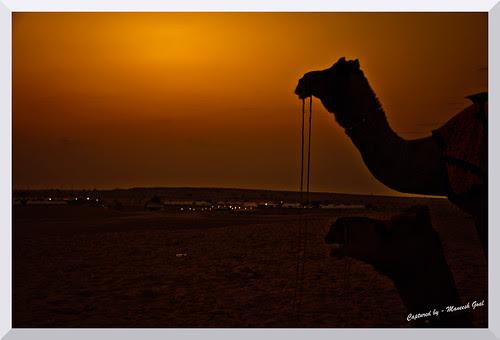 Sam Desert - Jaisalmer