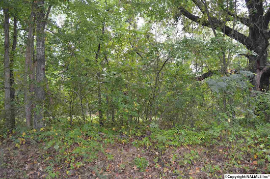 Lot 14 COUNTY ROAD 431, TRINITY, AL 35673