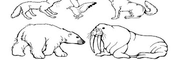 Free Printable Coloring Pages Of Arctic Animals