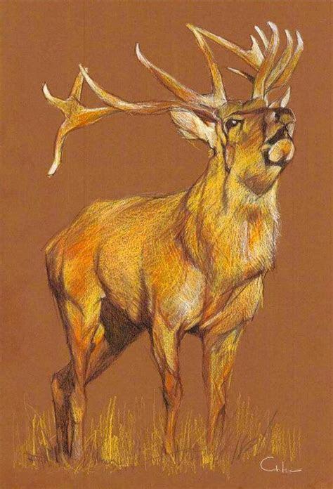 deer color pencil drawing wildlife wall art