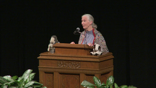 Tiger Network Presents: An Evening With Jane Goodall