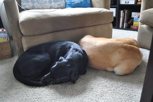 napping buddies