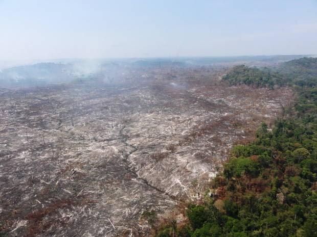 Órgãos ambientais interrompem 30 desmatamentos no Pará. (Foto: Nelson Feitosa / Divulgação)