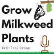 Grow Milkweed Plants: Mid-season Monarch Butterfly Rearing Supersode - 021