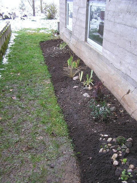 Tulip bed in fall 2012
