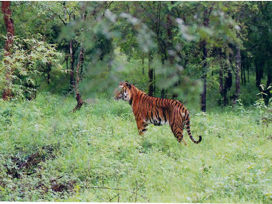 Route From Bangalore To The Bhadra Wildlife Sanctuary, Chikmagalur - Nativeplanet