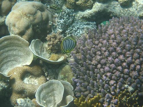 Ashmore reef 3