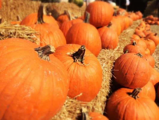 2018 Pumpkin Patches in Northern Virginia for Fall Festival Fun