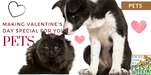 Make Valentine's Day Special for Dogs and Cats - PetsWeekly.com