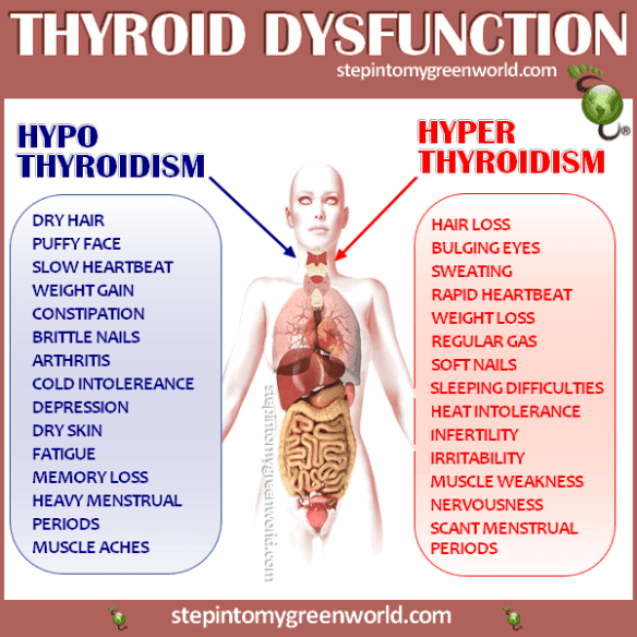 How to Cure Thyroid Gland's Iodine Deficiency with Walnuts and Honey