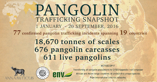 Shocking Figures Reveal Deadly Reality for Pangolins :: ANNAMITICUS