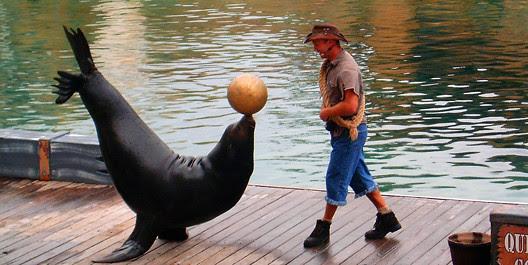 Sea World Sea Lion
