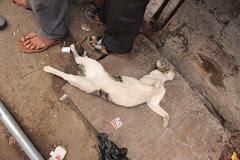 I Will Miss Cat Saturdays and Luiz Grimaldi by firoze shakir photographerno1