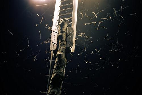 moths small