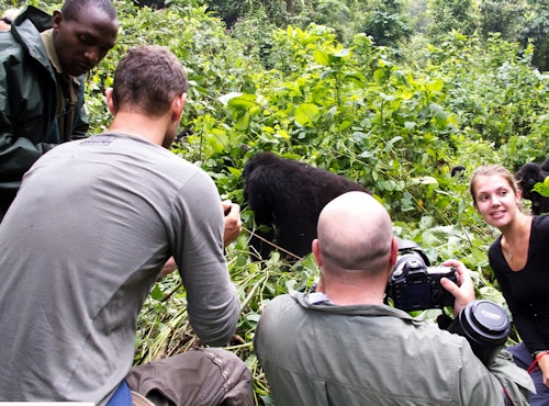 gorilla tracking experience