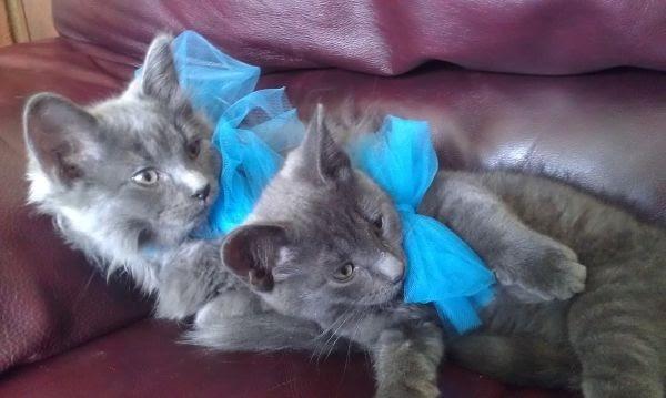 Carolina: Kittens For Sale Near Me Free Craigslist